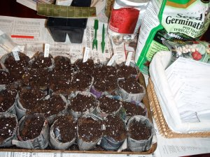Paper seedling pots are quick and easy to make.