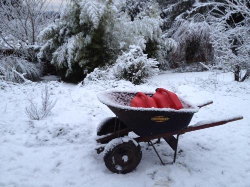 Winter at Dark Creek Farm