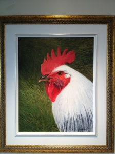Oil painting portrait of our Light Brahma rooster, Bill by E. Colin Williams