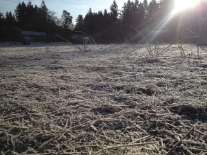 The turkey field looks quite different when it's frozen solid.
