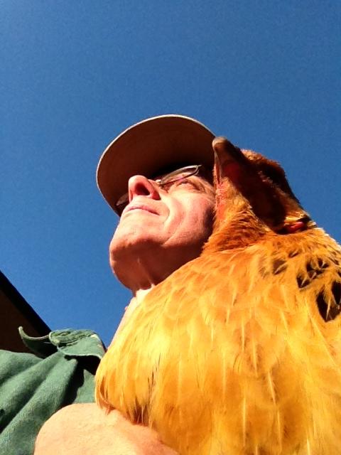 DCC Love My Chicken!