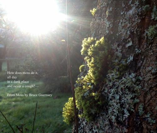 Moss on Plum Tree (Quote)