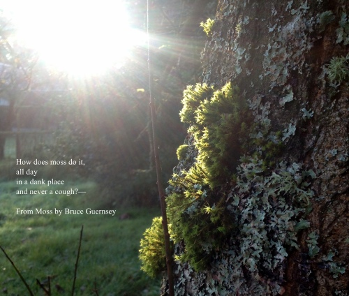 Moss on Plum Tree (Quote)
