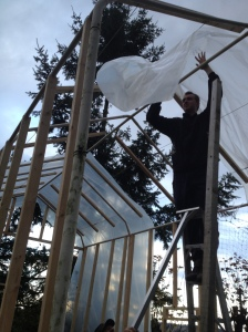 Tall guy, T. on an orchard ladder still finding it a stretch to get the poly over the top.