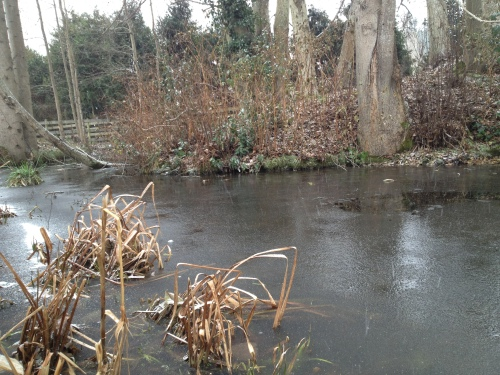 Pond Freezing Over