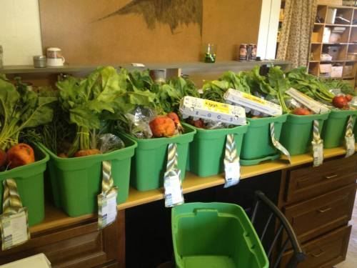 This year, we are offering several options for CSA subscribers.