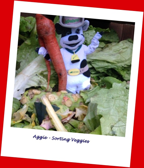 DCF Aggie and Veggies