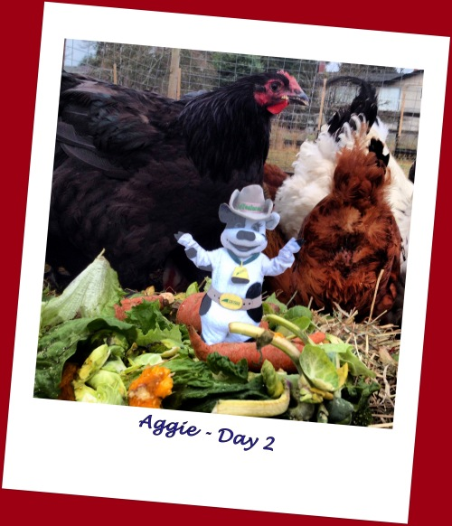 DCF Aggie with Black Orpington Hen