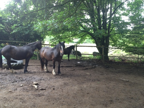 DCF Horses and Hogs