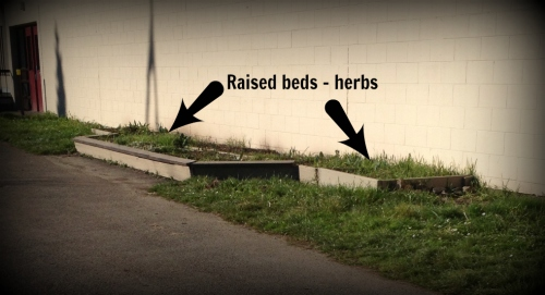 Shoreline Raised Beds