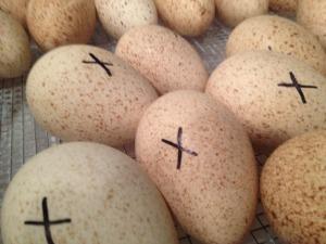 x marks the eggs