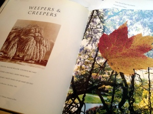 Leaves, mostly maple, have been carefully pressed between the pages of this library book about trees...