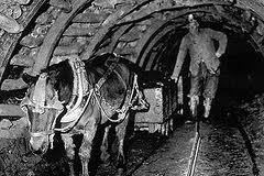 According to the Haig Pit Mining and Colliery Museum, In 1913 70000 horses were working underground in the UK.