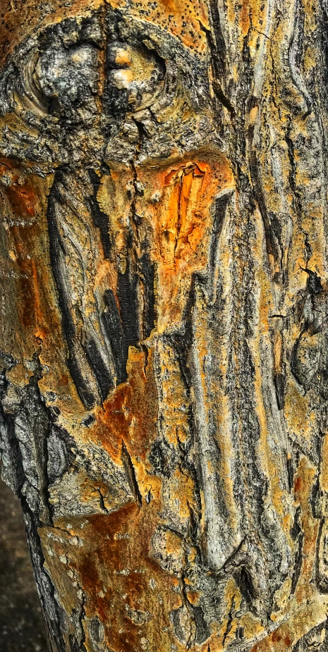 Quarry Lake Tree Bark